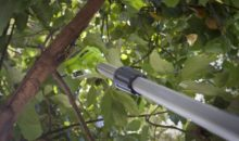 GreenWorks Cordless Pole Saw Review G-Max 40V 8-inch